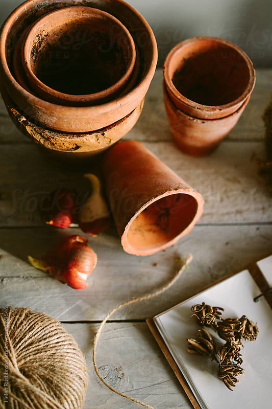 Ranunculus corms, clay pots and a journal on a desk by Helen Rushbrook for Stocksy United