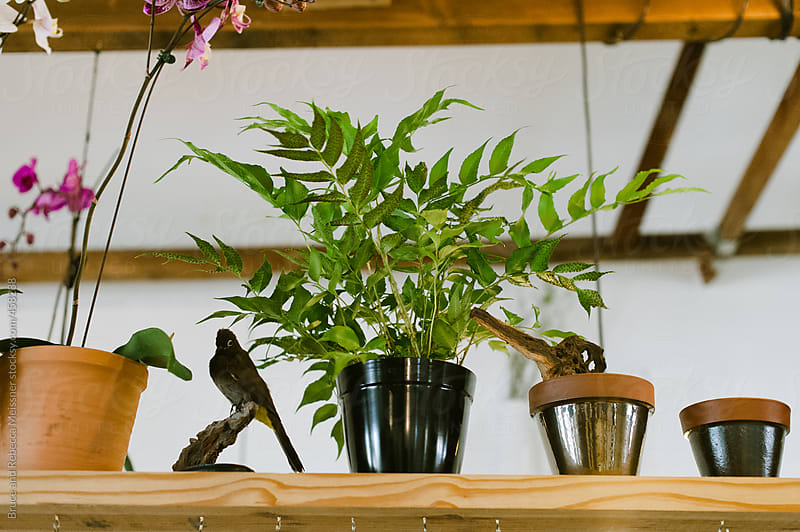 Interior of Florist by Bruce and Rebecca Meissner for Stocksy United