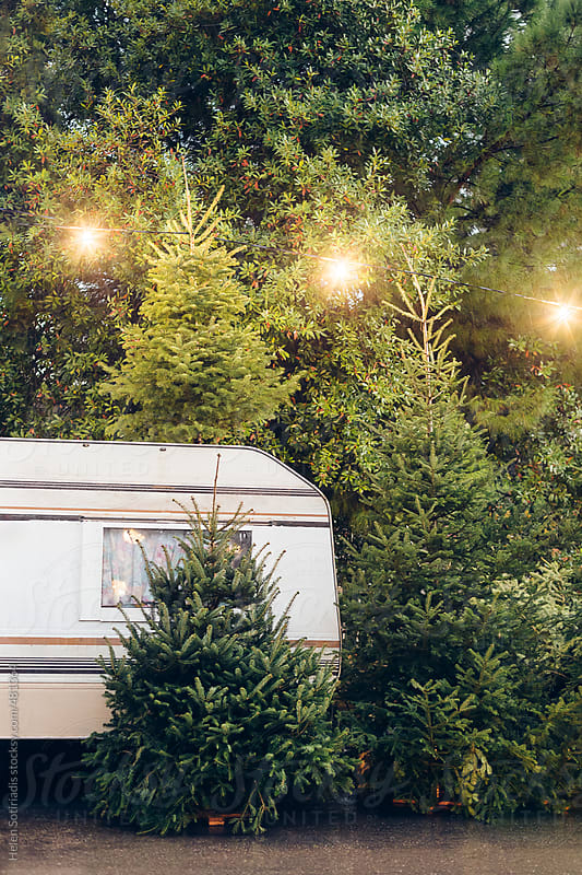 Christmas Trees for Sale with Trailer by Helen Sotiriadis for Stocksy United