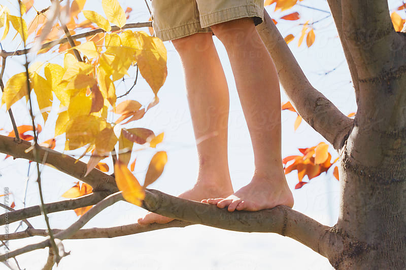 series of young boy climbing in a tree by Tana Teel for Stocksy United