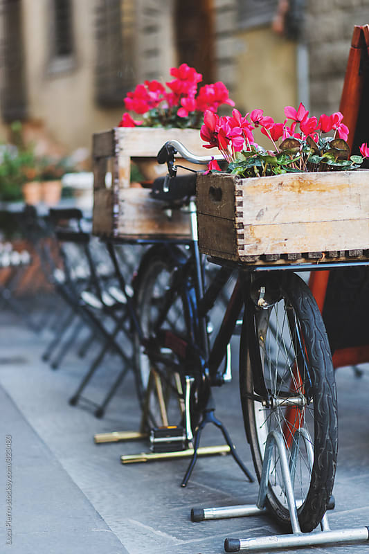 Vintage bicycle with flower by Luca Pierro for Stocksy United