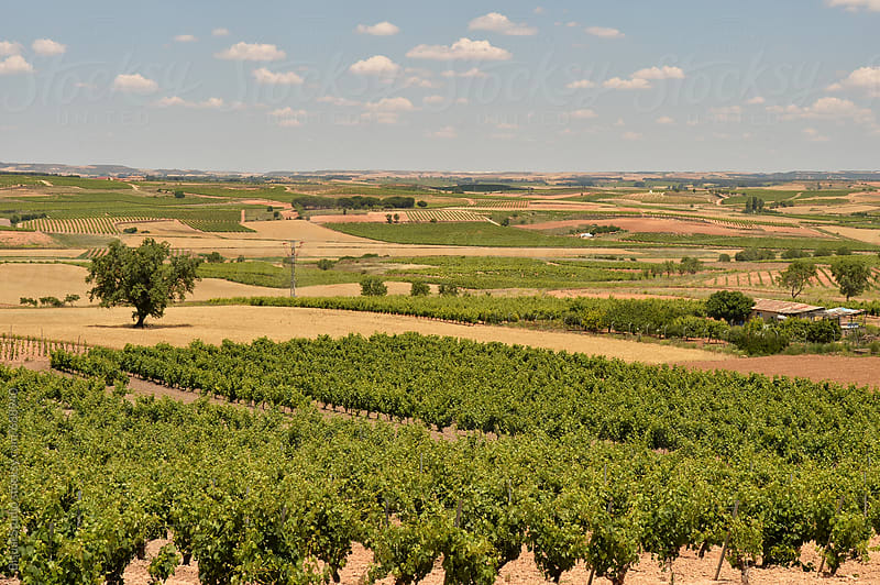 Vineyards in Ribera del Duero, Spain by Bisual Studio for Stocksy United
