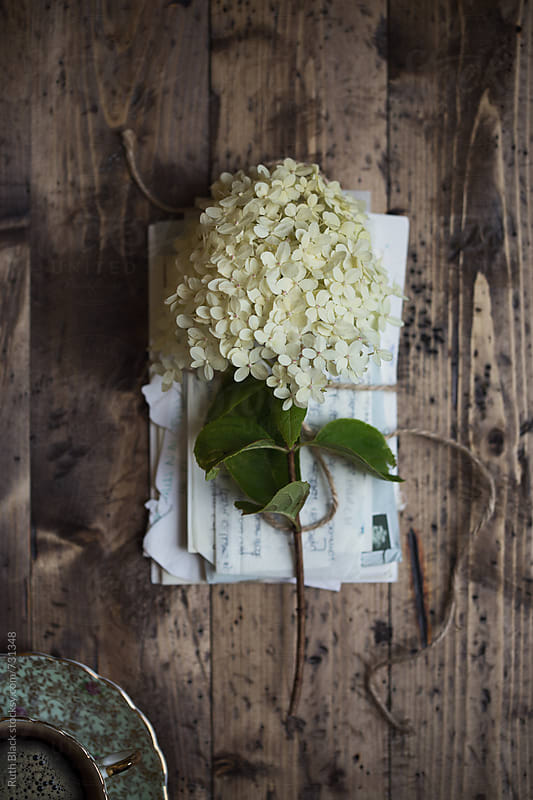 Old letters with hydrangea flower by Ruth Black for Stocksy United