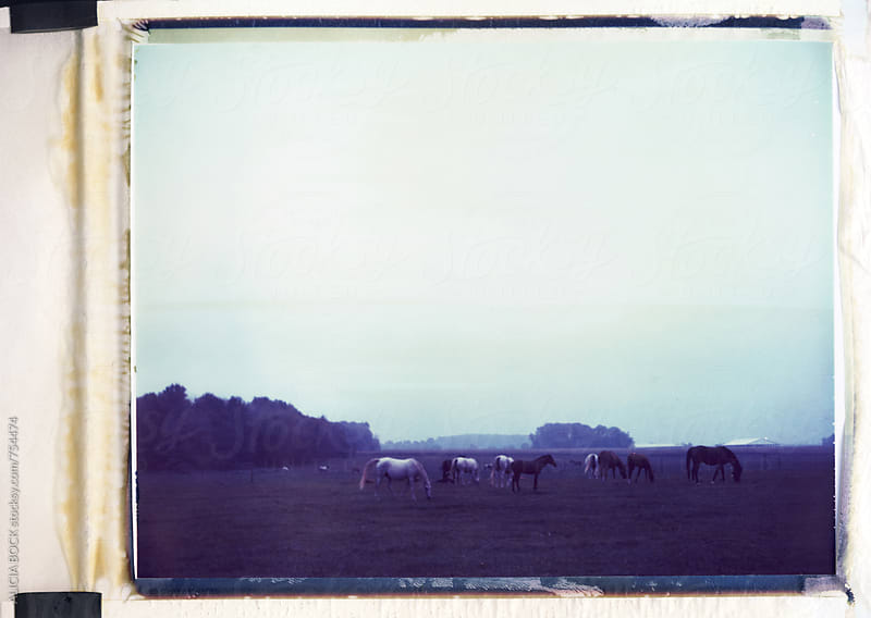 Horses In An Autumn Field Photographed On Expired Polaroid Film  by ALICIA BOCK for Stocksy United