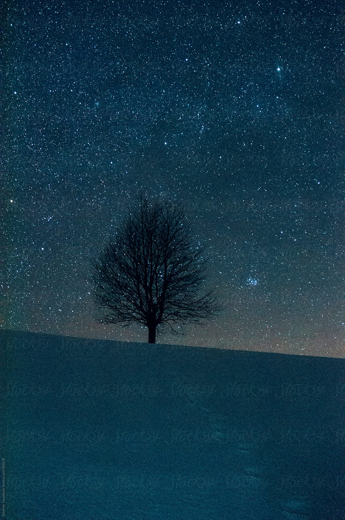 Beautiful winter night with a lot stars in the sky by Dimitrije