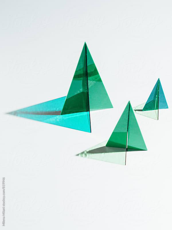 Geometric trees by Milena Milani for Stocksy United