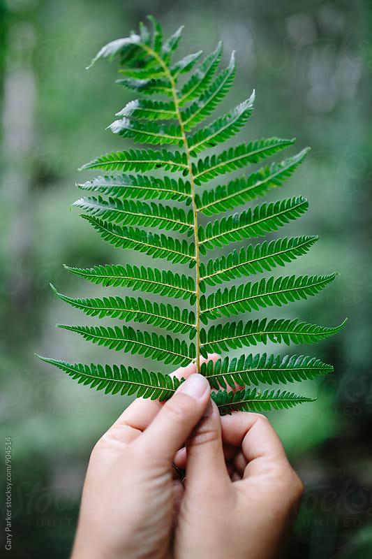 Girls hands holding an Australian fern leaf by Gary Parker for Stocksy United