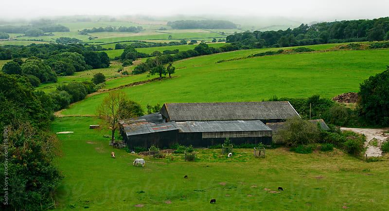 Livestock grazing among the hills by Sasha Evory for Stocksy United