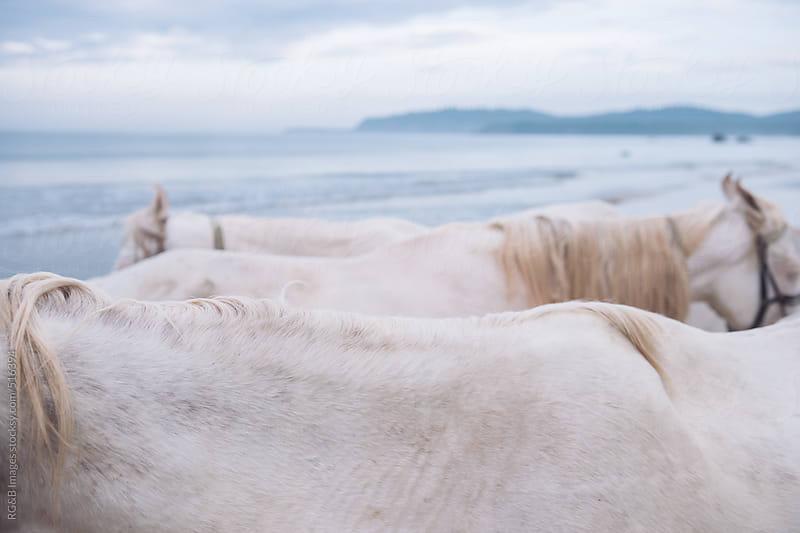 white horsebacks by RG&B Images for Stocksy United