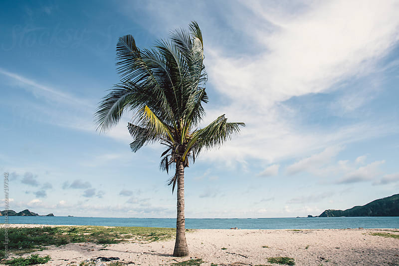 Ocean landscape and beach with isolated palm tree. by Soren Egeberg for Stocksy United
