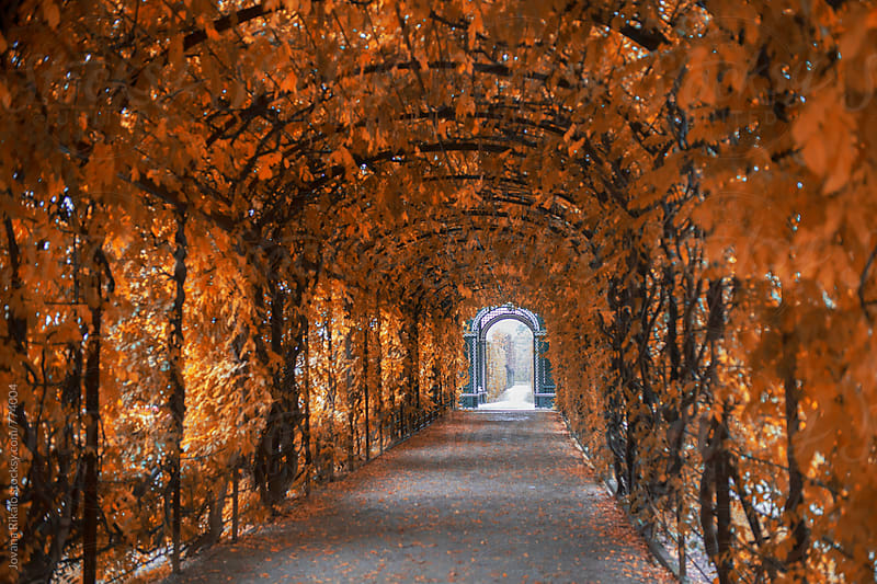 Leaf Covered Tunnel by Jovana Rikalo for Stocksy United