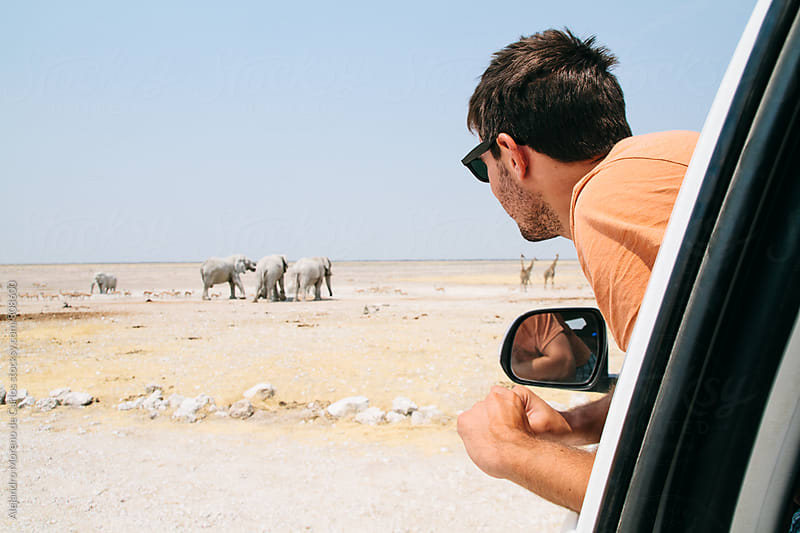 Young man with half his body out of a car window looking at elephants and giraffes in the background during a safari trip in the desert by Alejandro Moreno de Carlos for Stocksy United
