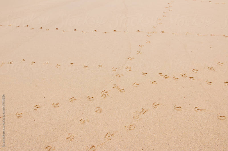 Bird footprints in the sand on the beach by Susana Ramírez for Stocksy United