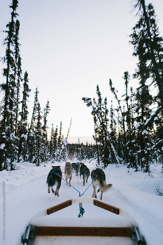 Dogsledding by Kristian Lynae Irey for Stocksy United