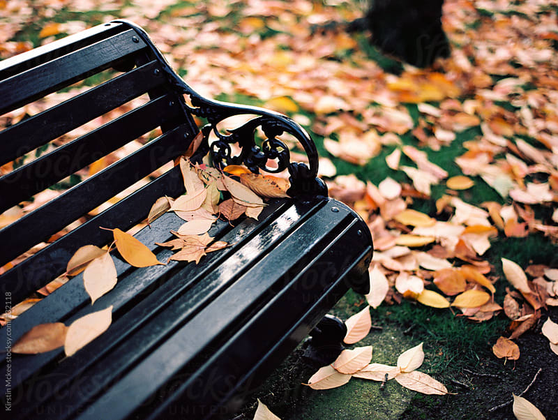 Bench in autumn surrounded by leaves by Kirstin Mckee for Stocksy United