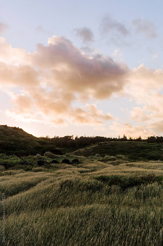 tall grass moves in the wind during sunset on Maui. by Benj Haisch for Stocksy United