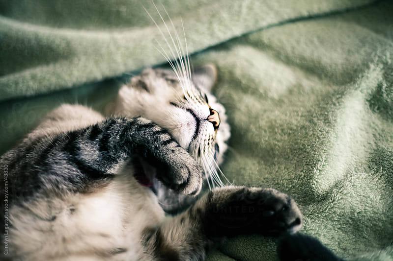 Siamese cat laying on her back sleeping by Carolyn Lagattuta for Stocksy United