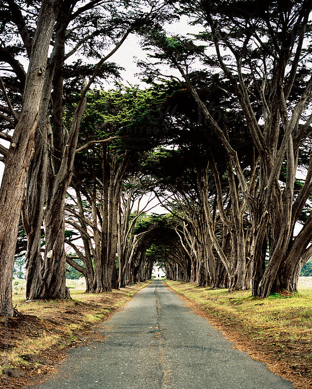 Point Reyes, California by Adam Naples for Stocksy United