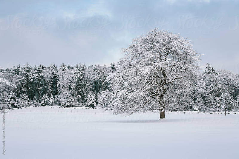Lone Tree in Winter by Raymond Forbes LLC for Stocksy United