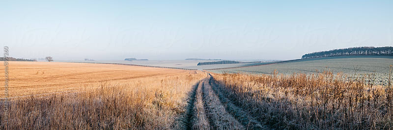 Frost covered track through fields at sunrise. Norfolk, UK. by Liam Grant for Stocksy United