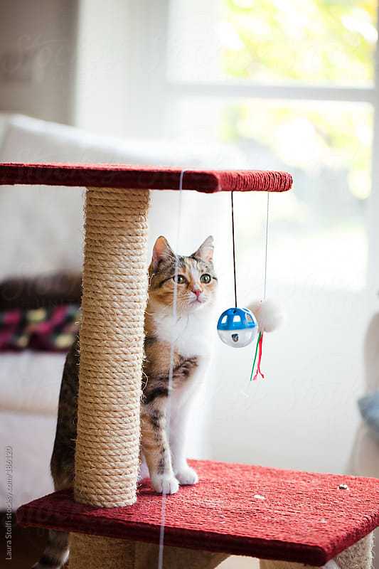 Cat sitting on scratching post and staring balls by Laura Stolfi for Stocksy United