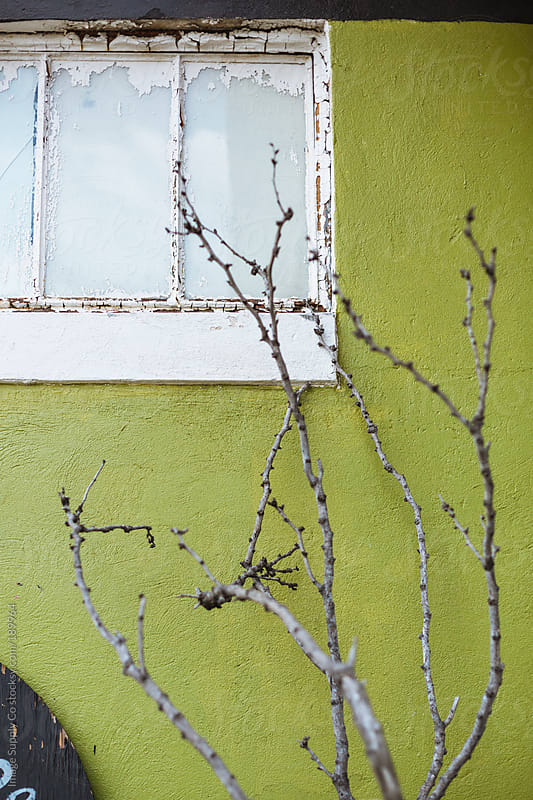 Green wall and window with dry tree branches by Image Supply Co for Stocksy United