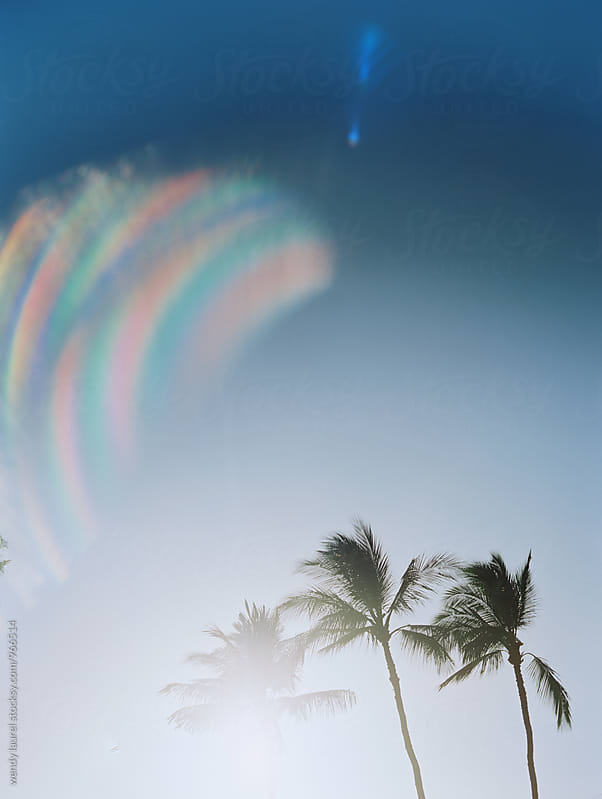 rainbow flare palm trees with blue sky by wendy laurel for Stocksy United