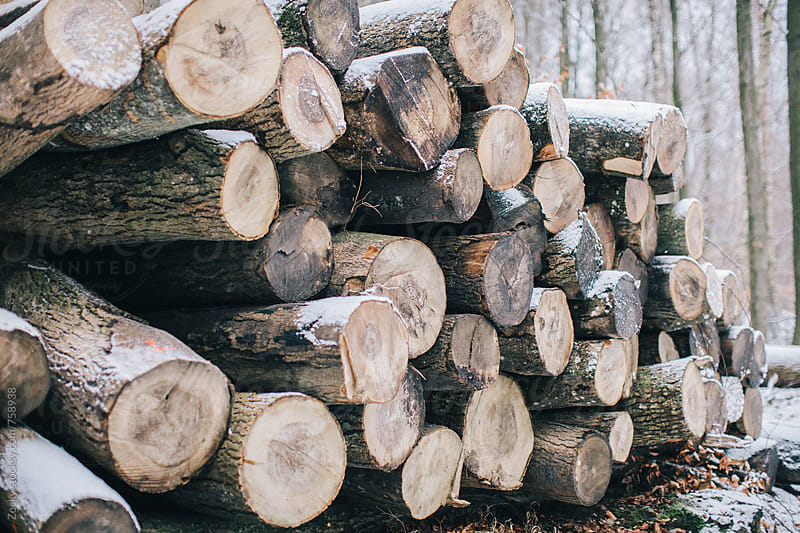 Stack of piled up fire wood by Zocky for Stocksy United