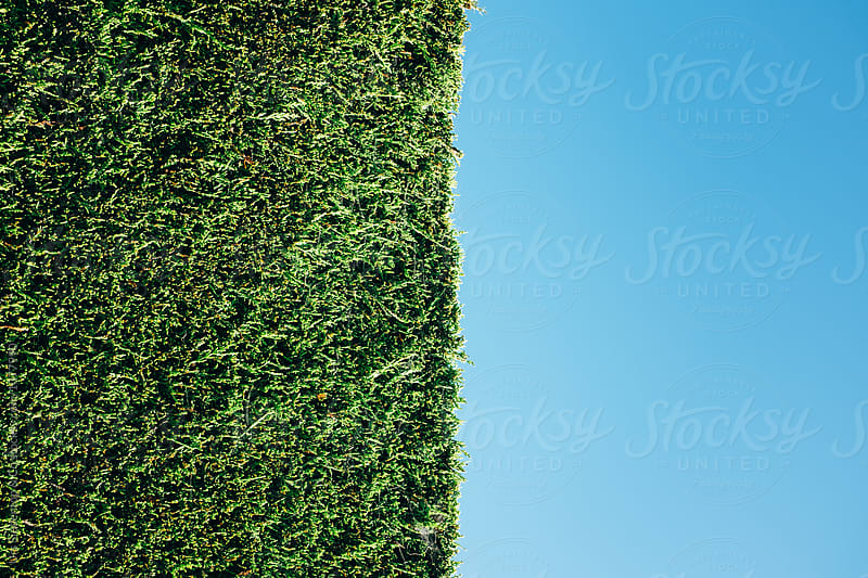 Hedge by Urs Siedentop & Co for Stocksy United