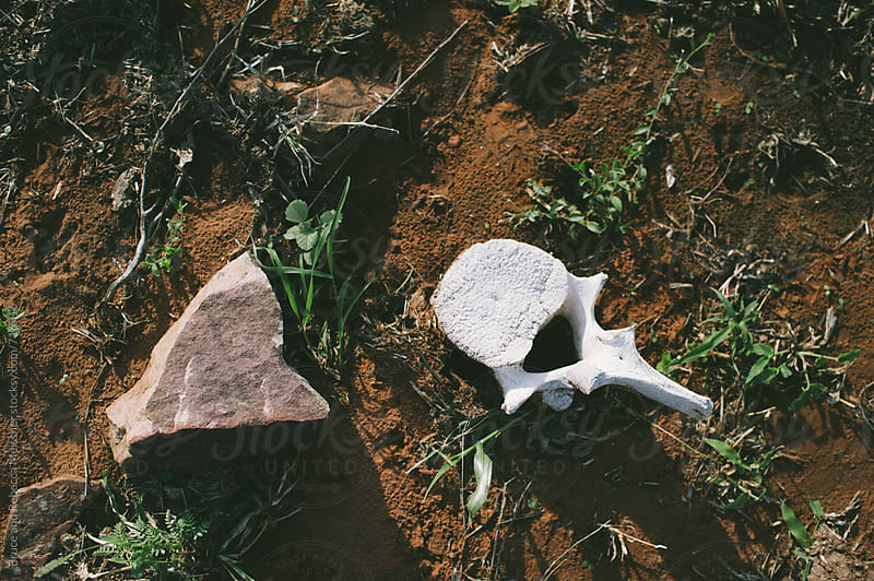 Elephant Vertebrae by Bruce Meissner for Stocksy United