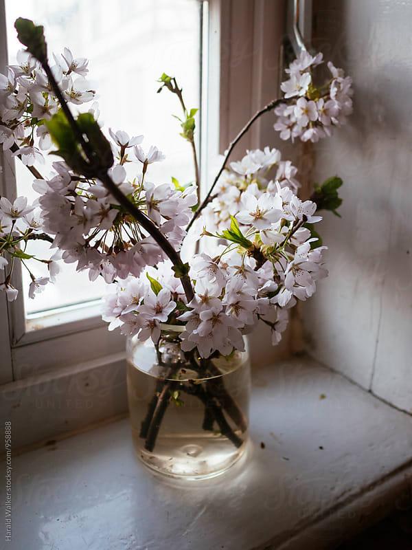 Spring inside by Harald Walker for Stocksy United