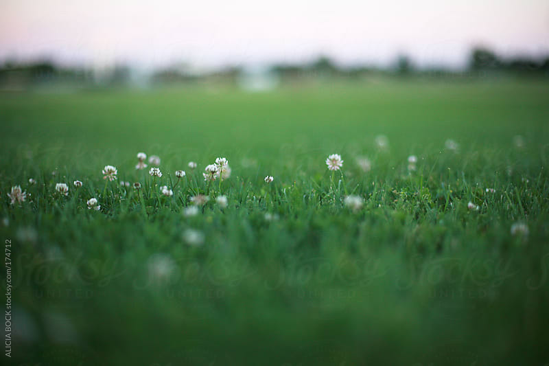 Clover In The Grass by ALICIA BOCK for Stocksy United