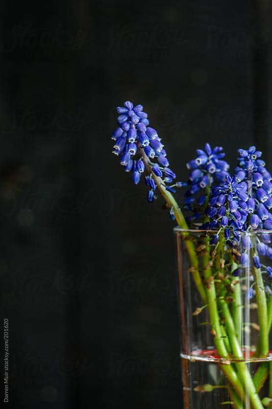 Wild flowers. by Darren Muir for Stocksy United