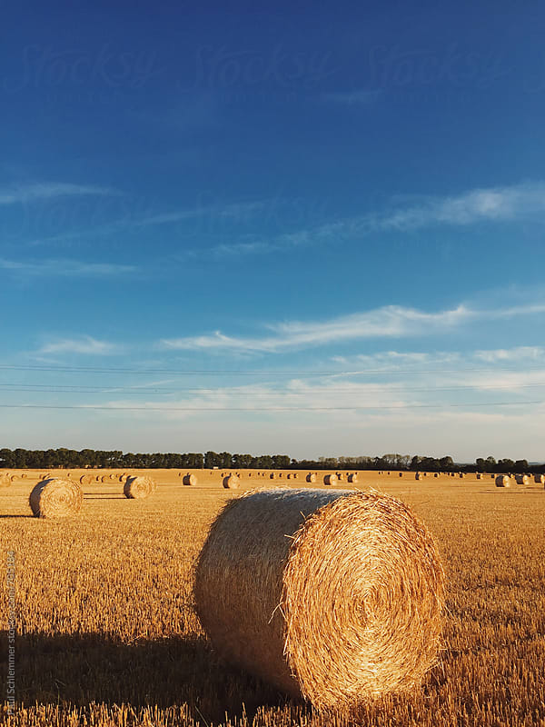 haystack by Paul Schlemmer for Stocksy United