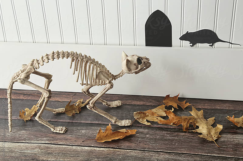 Halloween skeletal cat looking at a paper mouse by Sandra Cunningham for Stocksy United