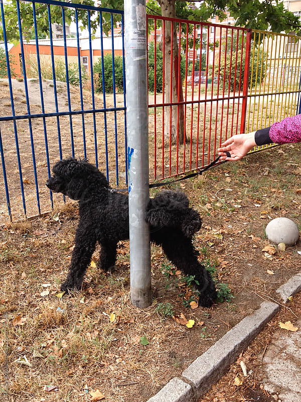 Black dog pees by Marija Kovac for Stocksy United