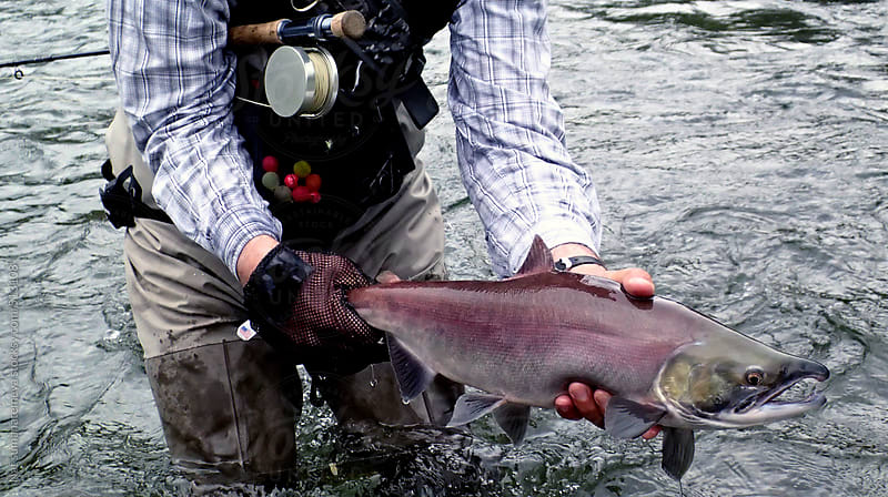 fly fisherman and Salmon by Nat sumanatemeya for Stocksy United