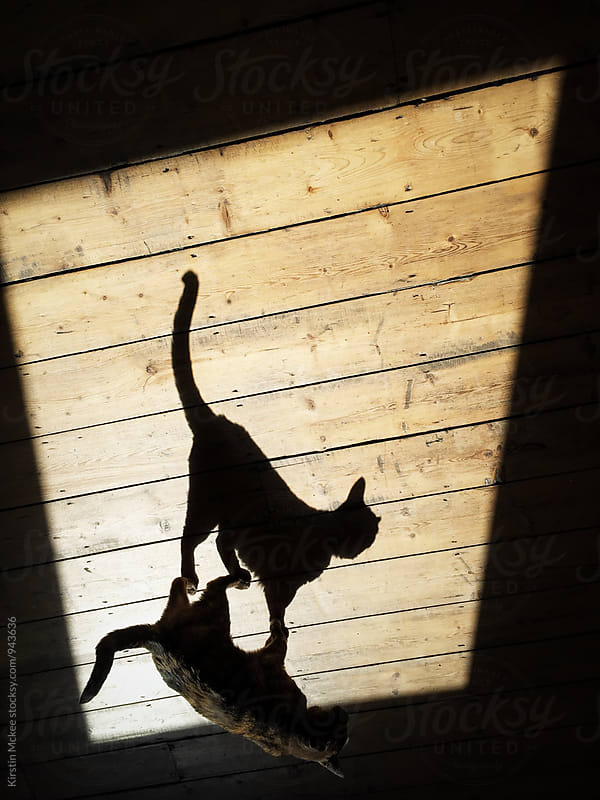Cat and her shadow by Kirstin Mckee for Stocksy United