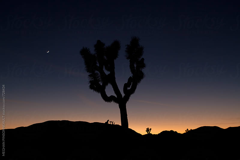 Dreamy Sunset with Joshua Tree and Moon Rising by MEGHAN PINSONNEAULT for Stocksy United