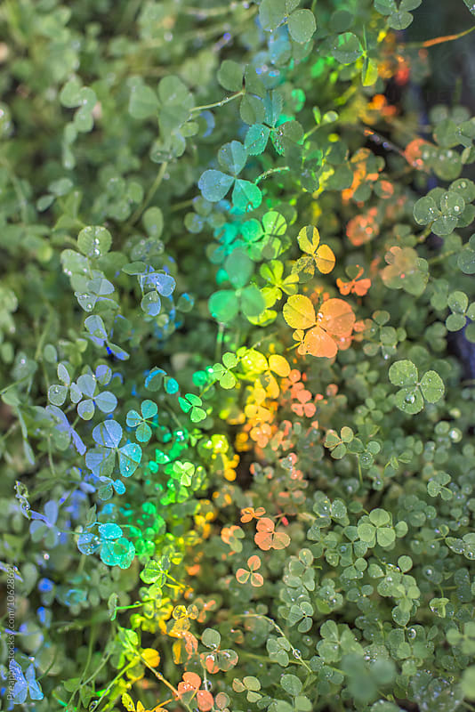 Rainbow on clovers by Preappy for Stocksy United