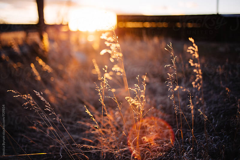 Sunset on the homestead. by Jessica Byrum for Stocksy United
