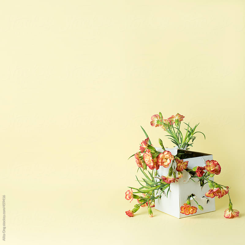 Floral explosion by Alita Ong for Stocksy United
