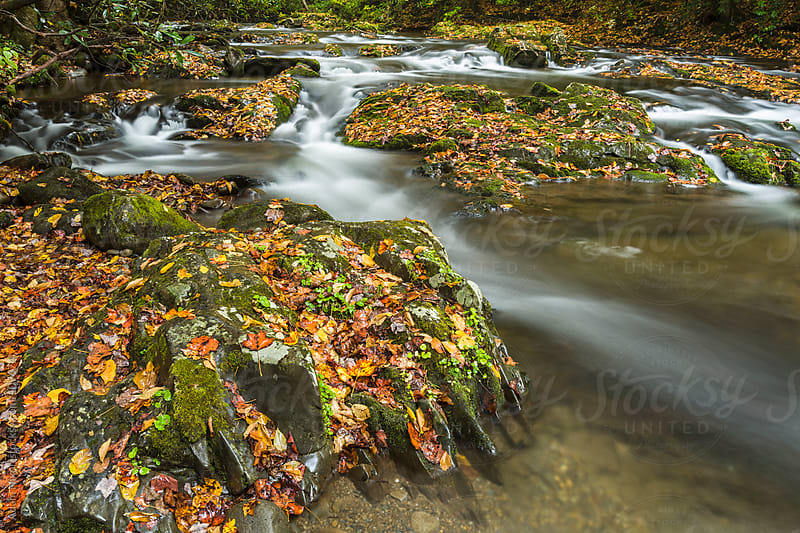 Autumn Leaves in the River by Adam Nixon for Stocksy United
