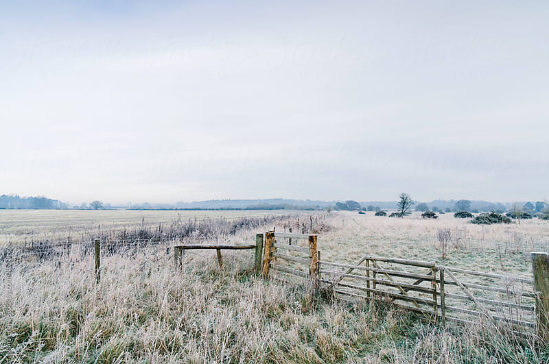 Rural field and gate covered in frost. Norfolk, UK. by Liam Grant for Stocksy United