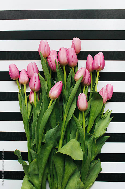 bouquet of pink tulips on a striped background by Kelly Knox for Stocksy United