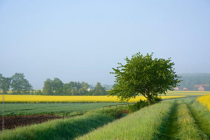 Rural landscape in East-Westphalia by Harald Walker for Stocksy United