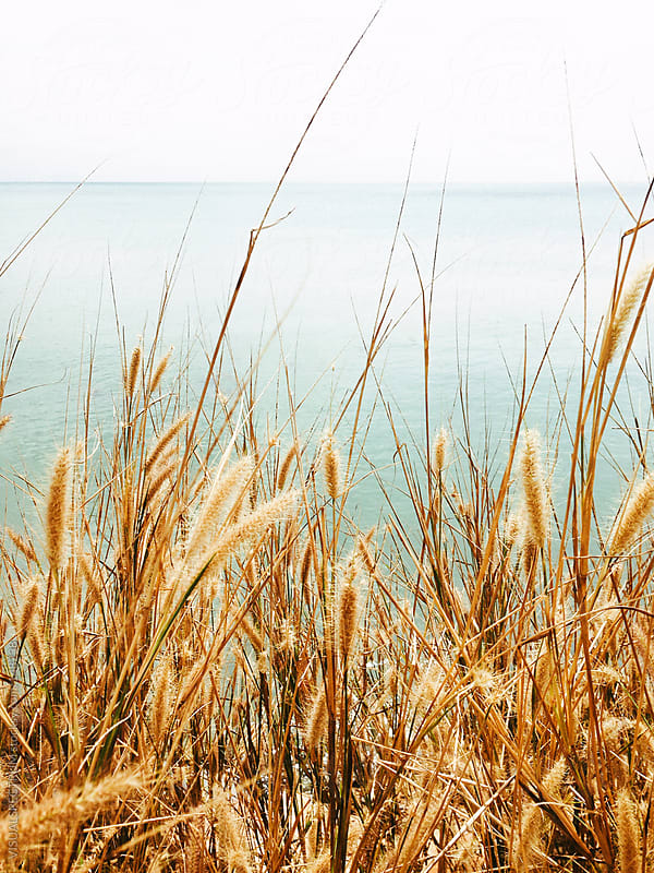 Grass By The Ocean by VISUALSPECTRUM for Stocksy United