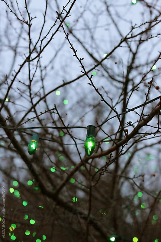 Green Christmas Lights On Bare Winter Tree  by ALICIA BOCK for Stocksy United