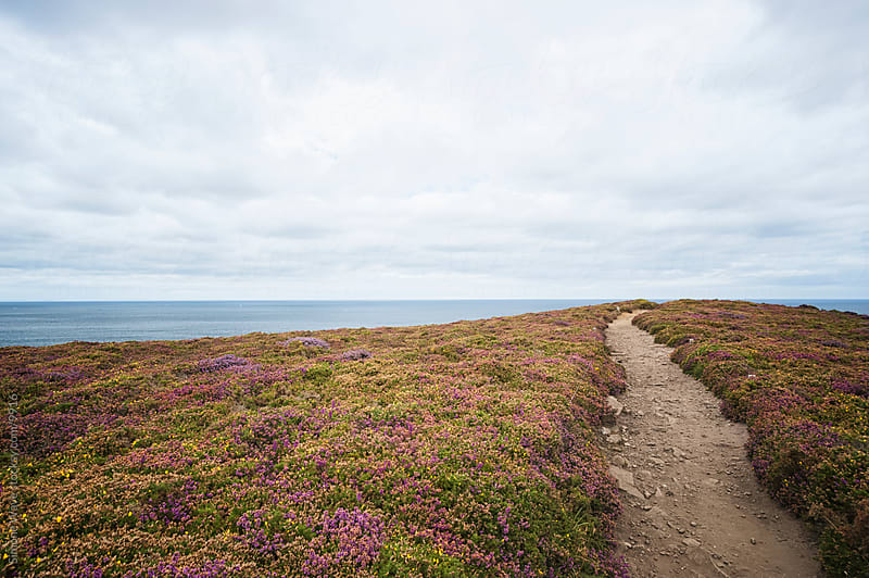 Path on the coastline in Brittany by Simone Becchetti for Stocksy United
