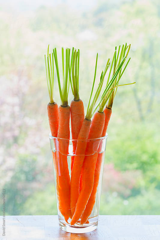 Whole carrots standing a in glass of water on windowsill by David Smart for Stocksy United